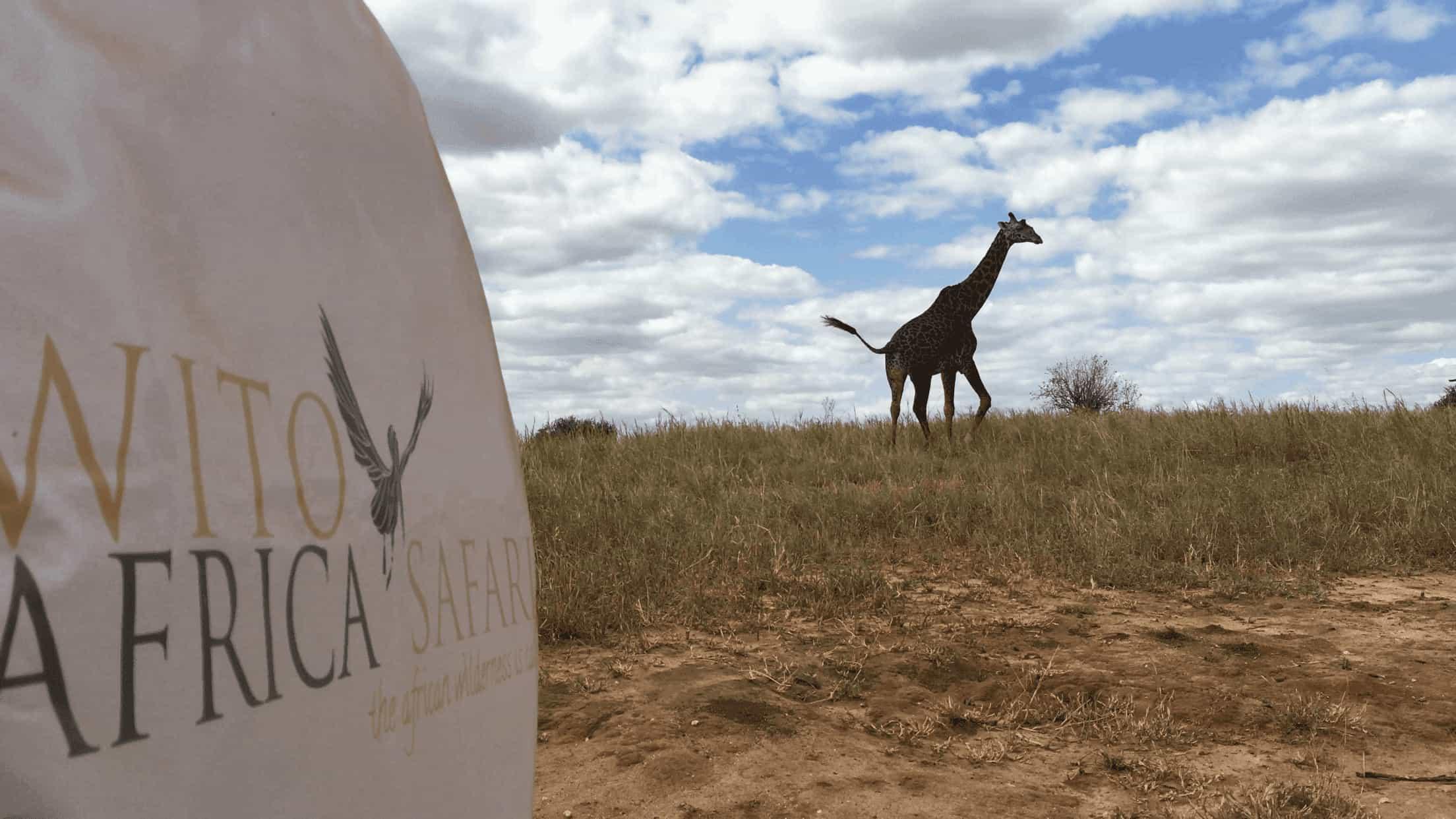 Wito Giraffe