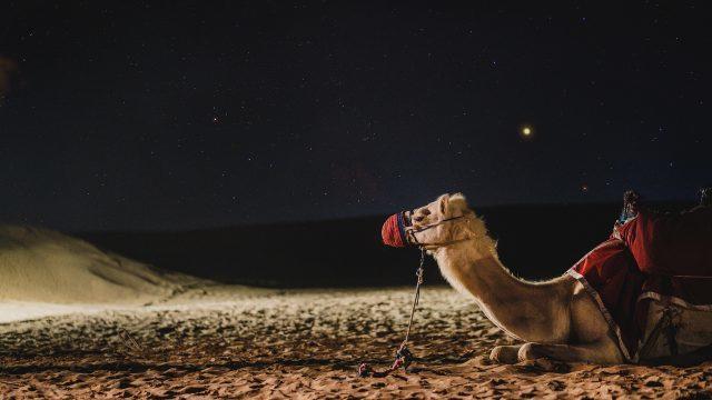 camel-Dubai 4948299_1920